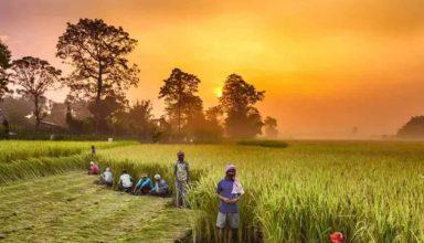किसानों की मदद के लिए सरकार ने लॉन्च किया 'Kisan Sarathi' एप, जानिए इसके फायदे!